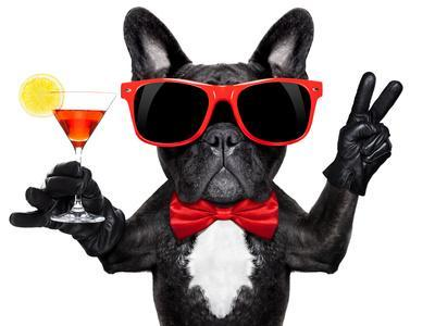 Cocktail Party Dog