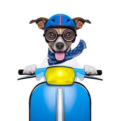 Crazy Speed Dog by Javier Brosch