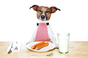 Dinner Meal at Table Dog by Javier Brosch