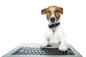 Dog Computer Pc Tablet by Javier Brosch