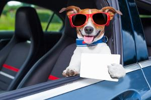 Dog Drivers License by Javier Brosch