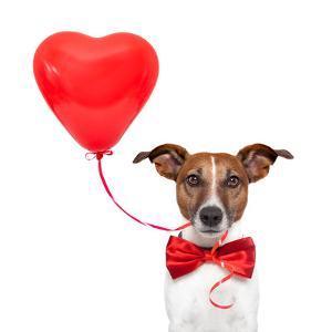 Dog In Love by Javier Brosch