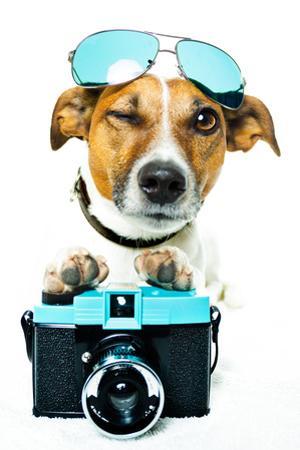 Dog Photo Camera by Javier Brosch