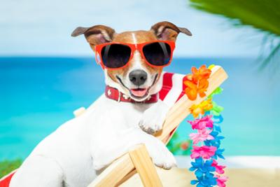 Dog Summer Vacation by Javier Brosch