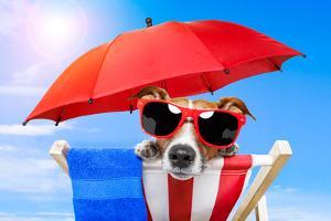 Dog Sunbathing by Javier Brosch
