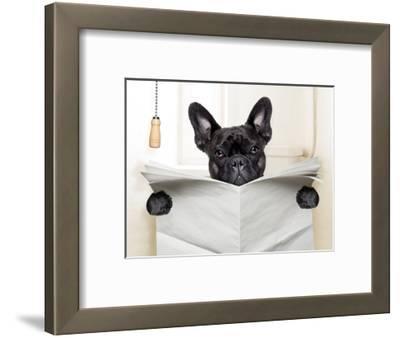 Dog Toilet