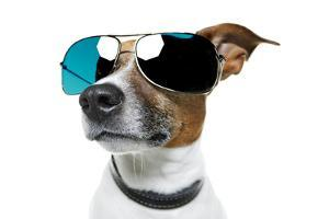 Dog With Funny Shades by Javier Brosch