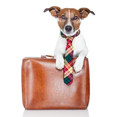 Dog With Leather Bag by Javier Brosch