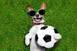 Funny Brazil Soccer Dog by Javier Brosch