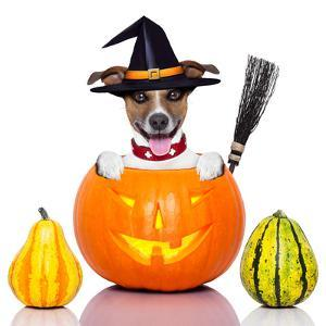 Halloween Dog as Witch by Javier Brosch