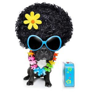 Hippie Dog by Javier Brosch