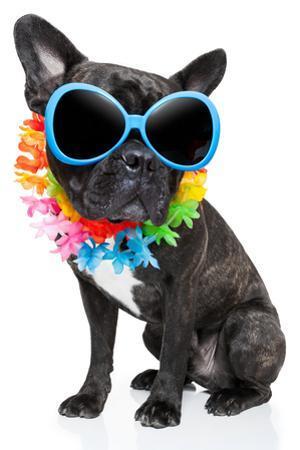 Holiday Summer Dog by Javier Brosch
