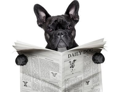 Newspaper Bulldog by Javier Brosch