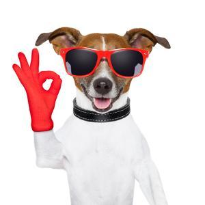 Ok Fingers Dog by Javier Brosch