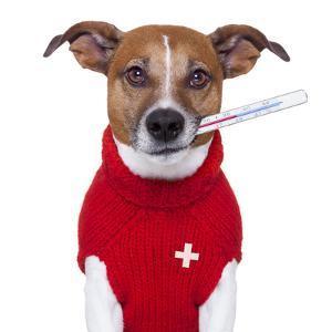 Sick Dog by Javier Brosch