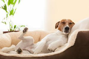 Siesta Dog by Javier Brosch