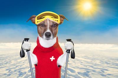 Skiing Dog by Javier Brosch