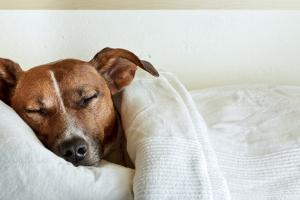 Sleeping Dog by Javier Brosch