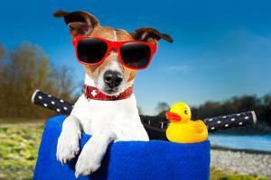 Summer Dog on Bike by Javier Brosch