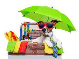 Summer Holiday Dog by Javier Brosch