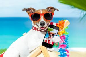 Summer Selfie Dog by Javier Brosch