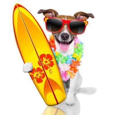 Surfer Dog by Javier Brosch