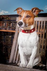 Thoughtful Dog by Javier Brosch