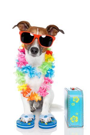 Tourist Dog With Hawaiian Lei And A Bag by Javier Brosch