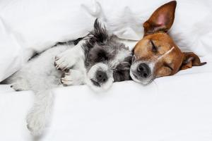 Two Dogs in Love by Javier Brosch