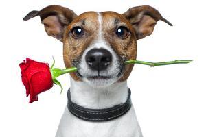 Valentine Dog by Javier Brosch