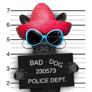 Wanted Dog by Javier Brosch