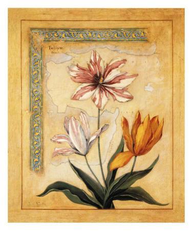 Flores Exoticas y Mapas I
