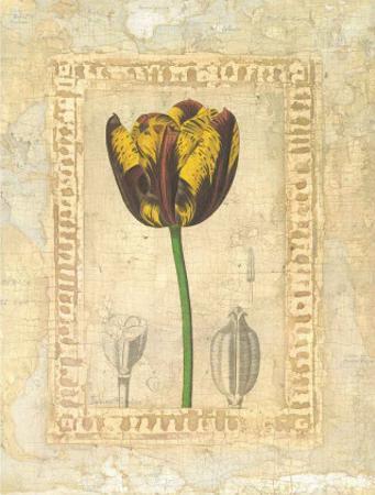 Tulipanes Bessa I