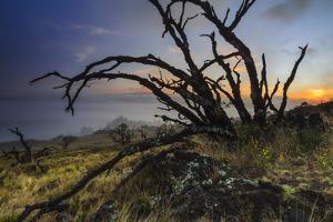 Burned Koa Trees, Silhouetted Against Sunset On The Mauna Kea Volcano On The Big Island Of Hawaii by Jay Goodrich