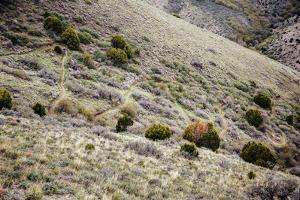 Heather Goodrich Riding Singletrack Switchbacks In Early Spring Near Pocatello, Idaho by Jay Goodrich