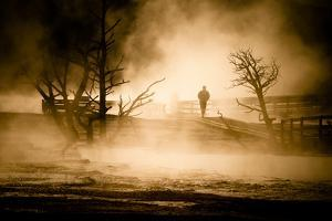Man Walks Through The Early Morning Mist At Mammoth Hot Springs In Yellowstone NP Wyoming by Jay Goodrich