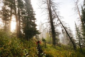 Mountain Biker Descends The Parallel Trail On Teton Pass Near Wilson, Wyoming by Jay Goodrich