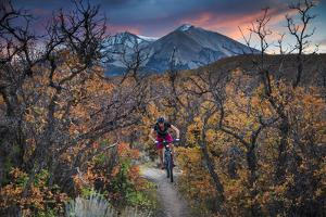 Mountain Biker Rides Through Gamble's Oak In Carbondale Colorado During Peak Autumn Color by Jay Goodrich