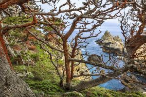 The Abstract And Twisted Lines Of Cypress Branches In Point Lobos State Reserve Near Monterey, CA by Jay Goodrich