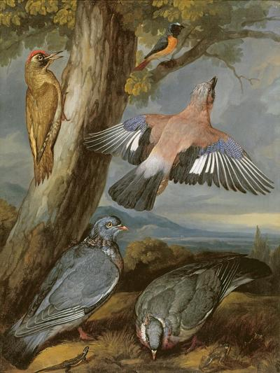 Jay, Green Woodpecker, Pigeons and Redstart, C.1650-Francis Barlow-Giclee Print