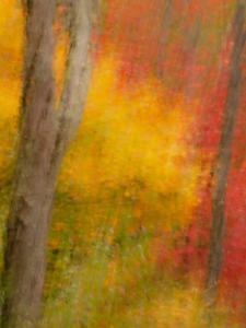 Abstract of Autumn Forest Scene, New York, Usa by Jay O'brien