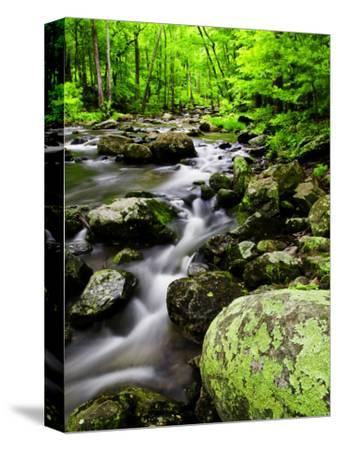 Creek Flows Through Forest, Shenandoah National Park, Virginia, USA
