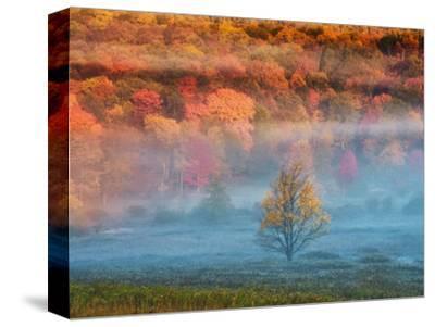 Misty Valley and Forest in Autumn, Davis, West Virginia, USA