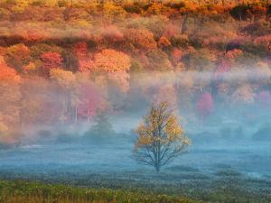 Misty Valley and Forest in Autumn, Davis, West Virginia, USA by Jay O'brien