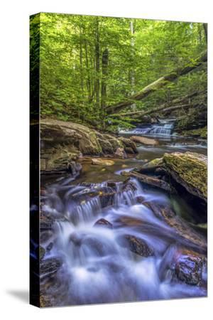 Pennsylvania, Benton, Ricketts Glen State Park. Kitchen Creek Cascade