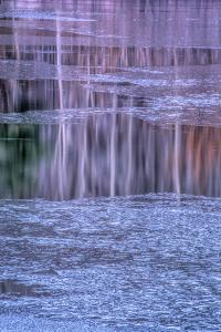 Pennsylvania, Delaware Water Gap NRA. Tree Reflection on Icy Lake by Jay O'brien