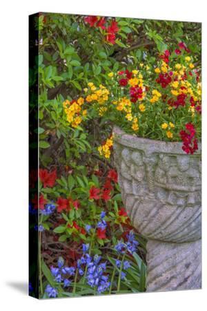 USA, Pennsylvania, Wayne, Chanticleer Garden. Flower Scenic