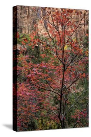USA, Utah, Zion National Park. Autumn Scenic
