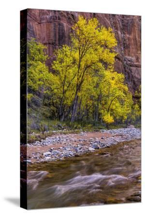 USA, Utah, Zion National Park. Stream in Autumn Scenic
