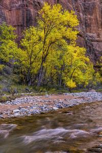 USA, Utah, Zion National Park. Stream in Autumn Scenic by Jay O'brien